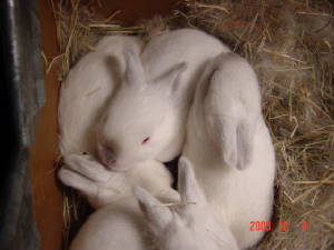 emilybunnies-13days006b.jpg